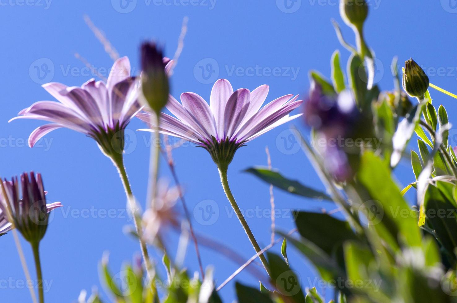 flor de colores sobre fondo de cielo azul foto