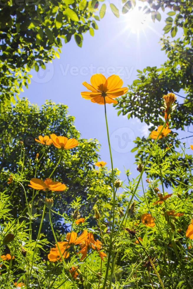 flores amarillas contra el cielo foto