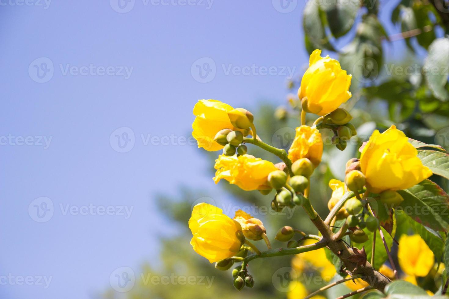 yellow flower with blue sky background photo