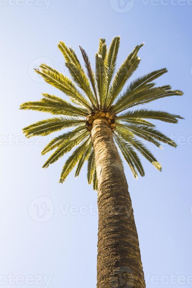 Beautiful palm tree with blue sunny sky photo