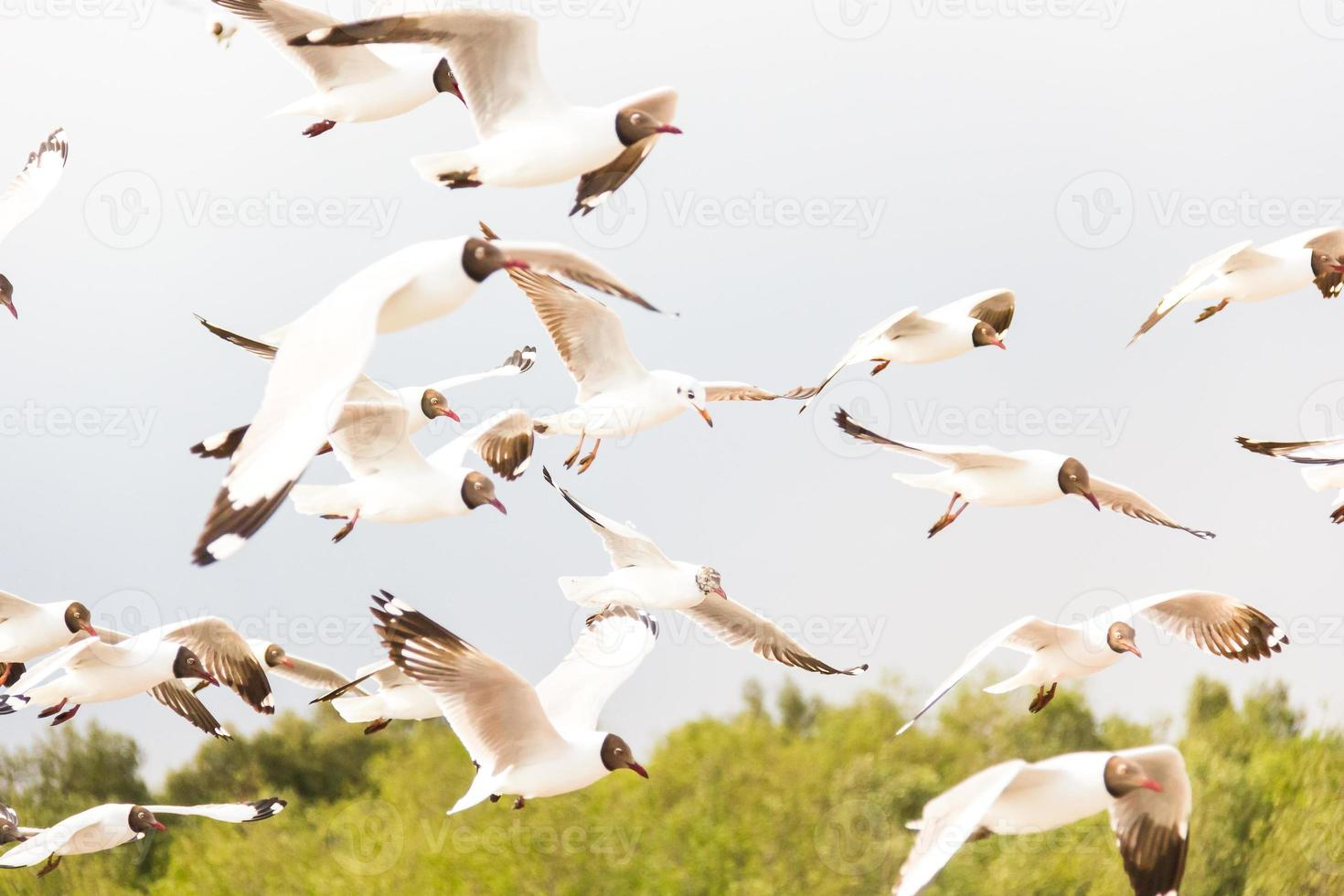 Flying white seagull in the nature sky background photo