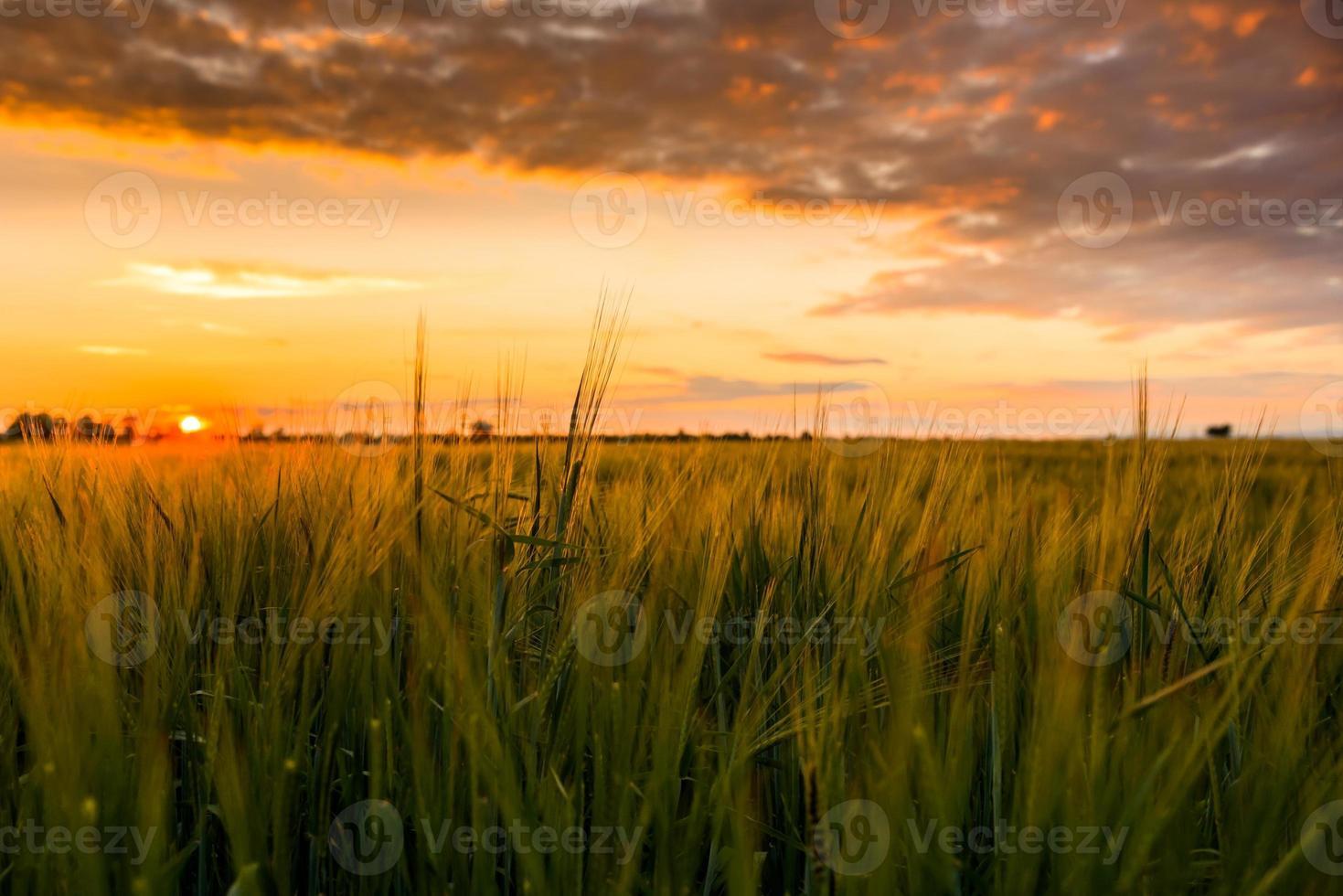 tierra cultivada con cielo nublado foto