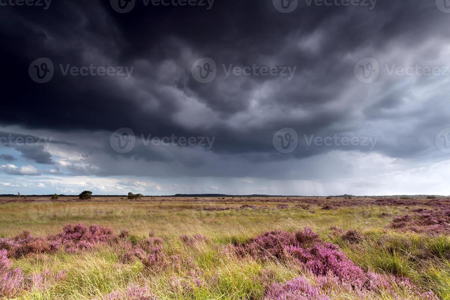 cielo tormentoso sobre prados con brezos foto