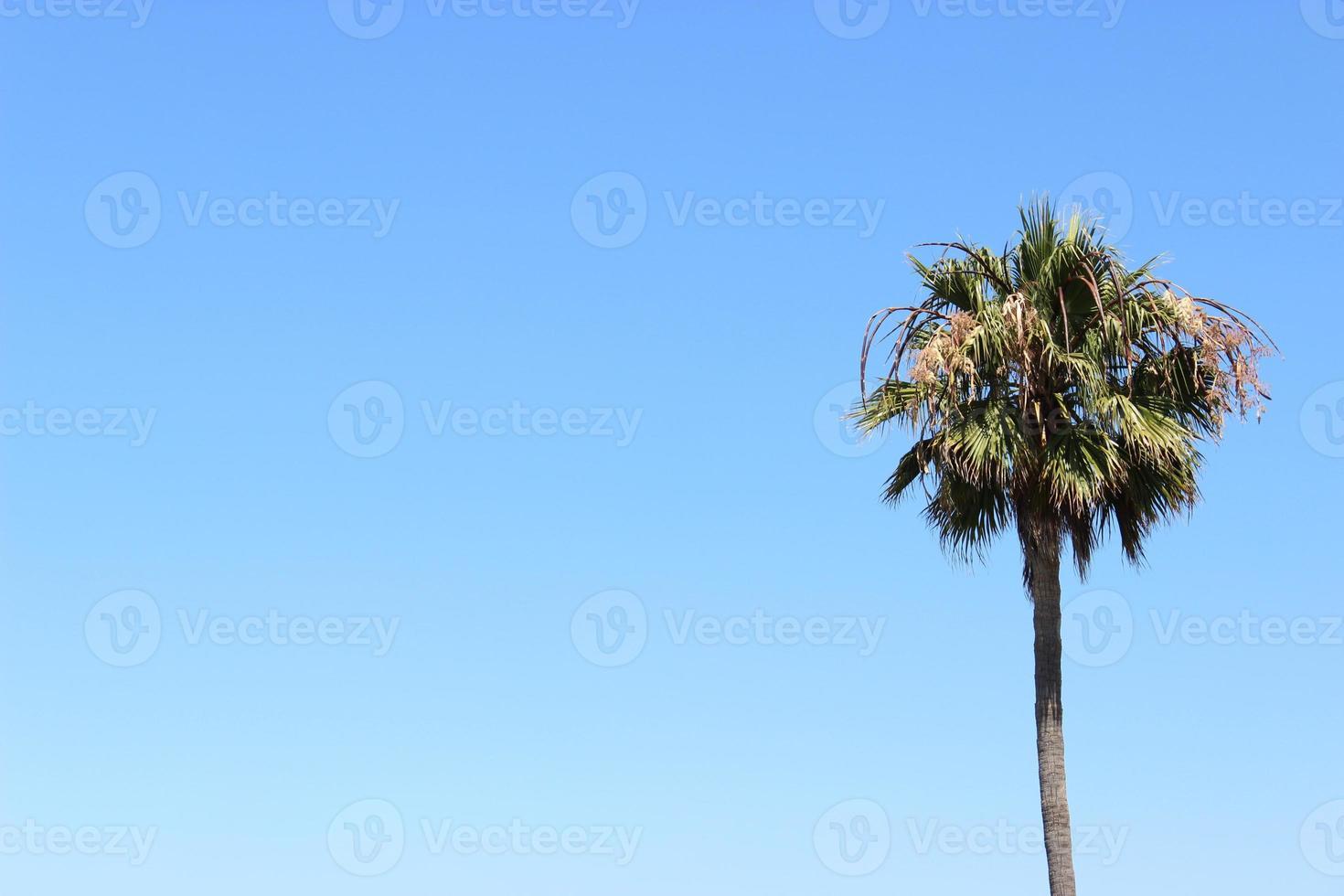 sola palmera con cielo azul foto