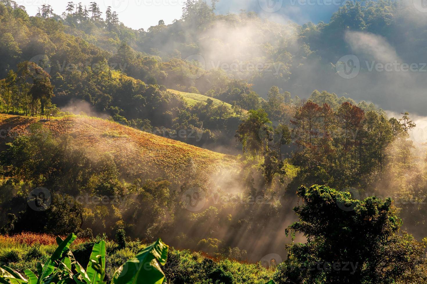 colinas con nubes y niebla foto