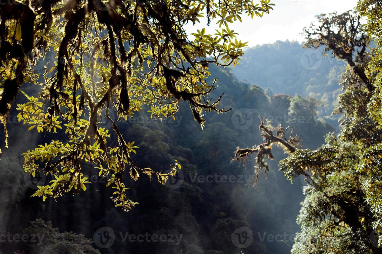 árboles en el fondo con el bosque lluvioso de la montaña del himalaya nepal foto
