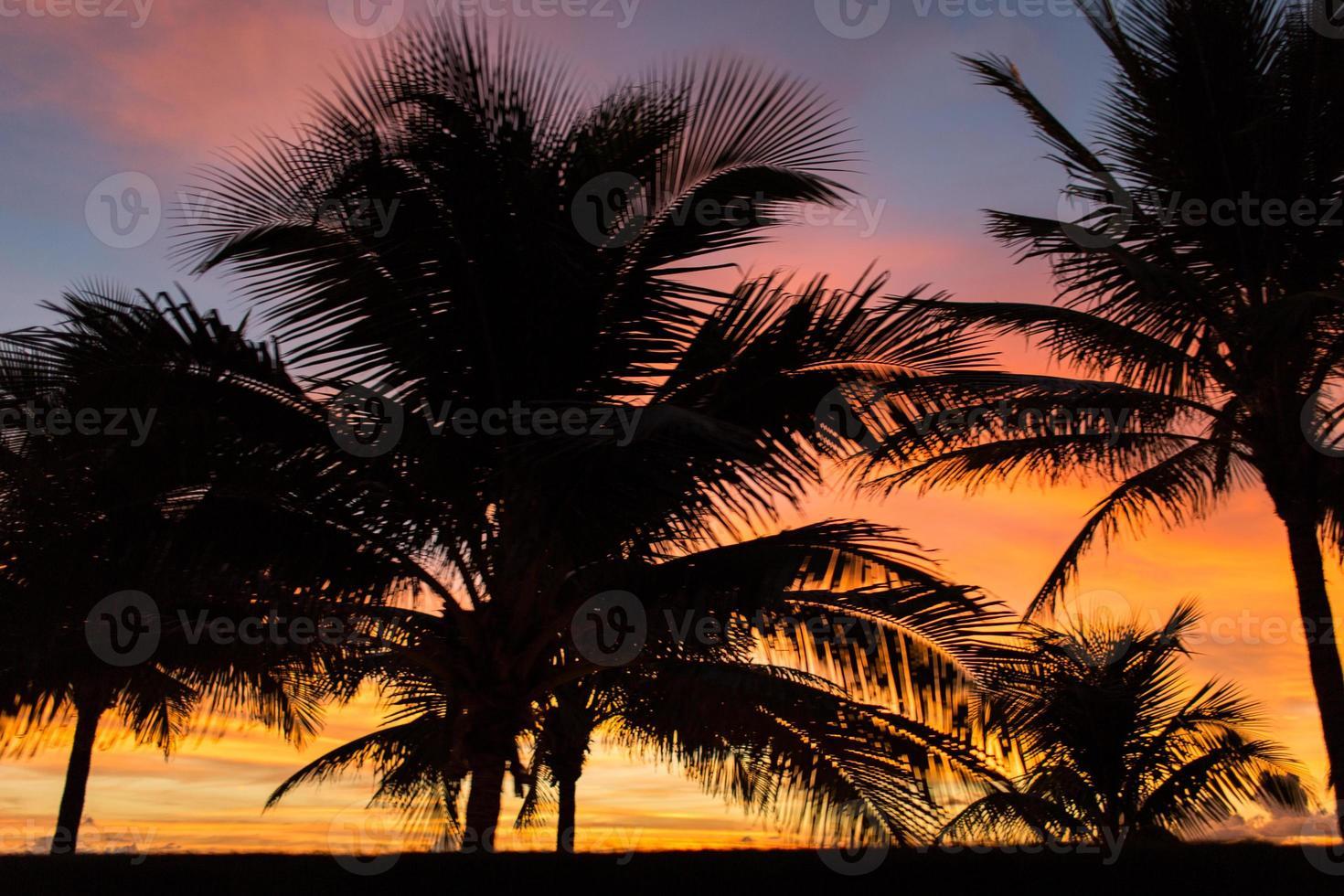 Golden Palm Trees photo