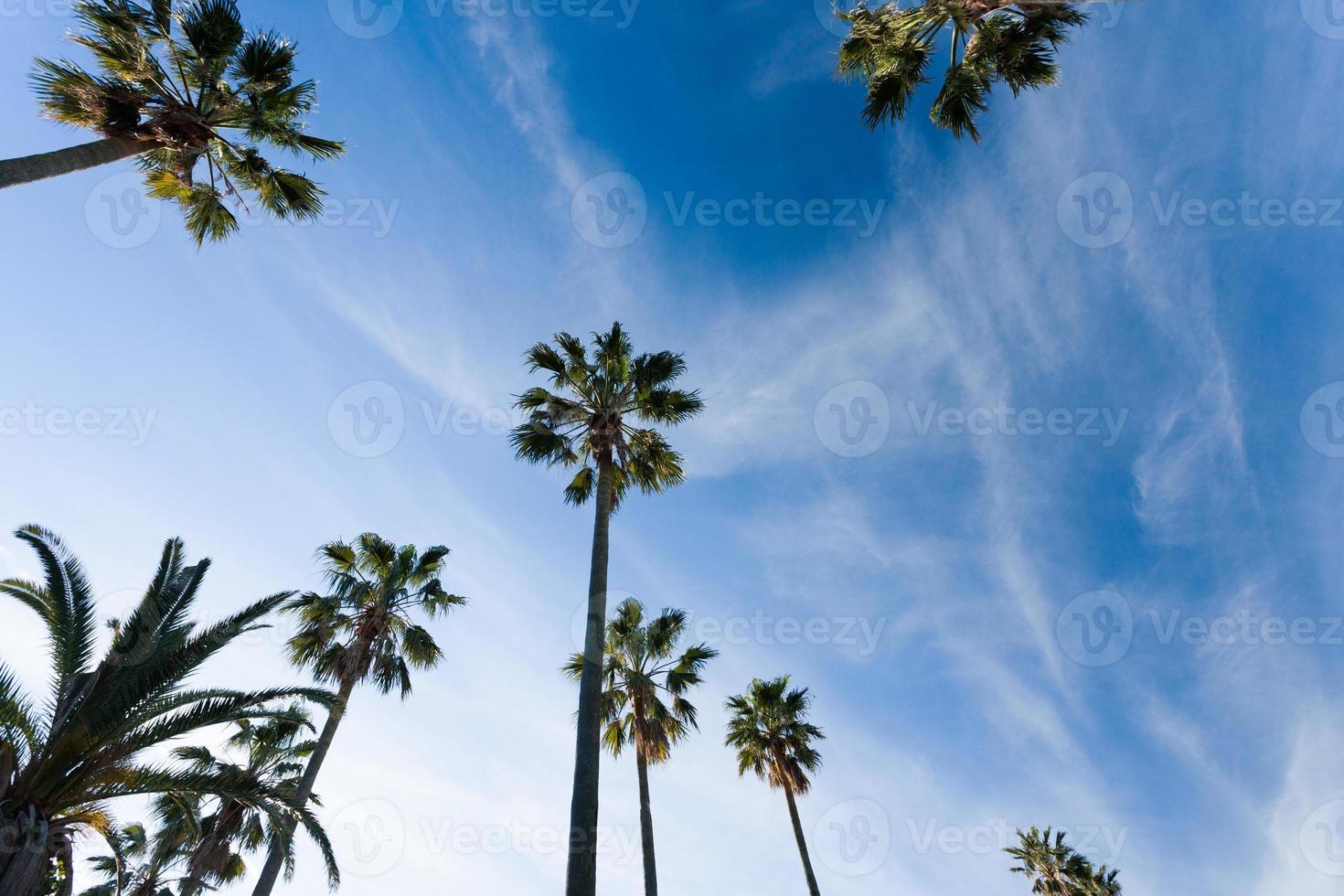 Palm tree-lined Shonan photo