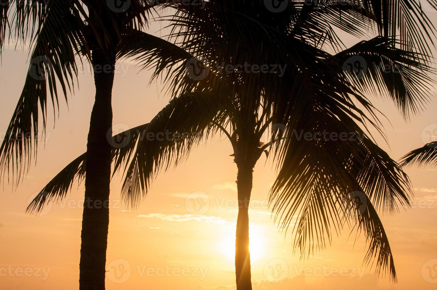 Palm trees in the morning photo