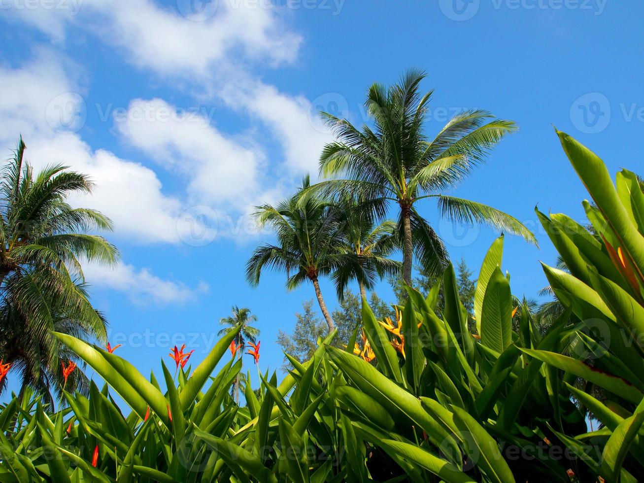 Lush greenery and tropical weather photo