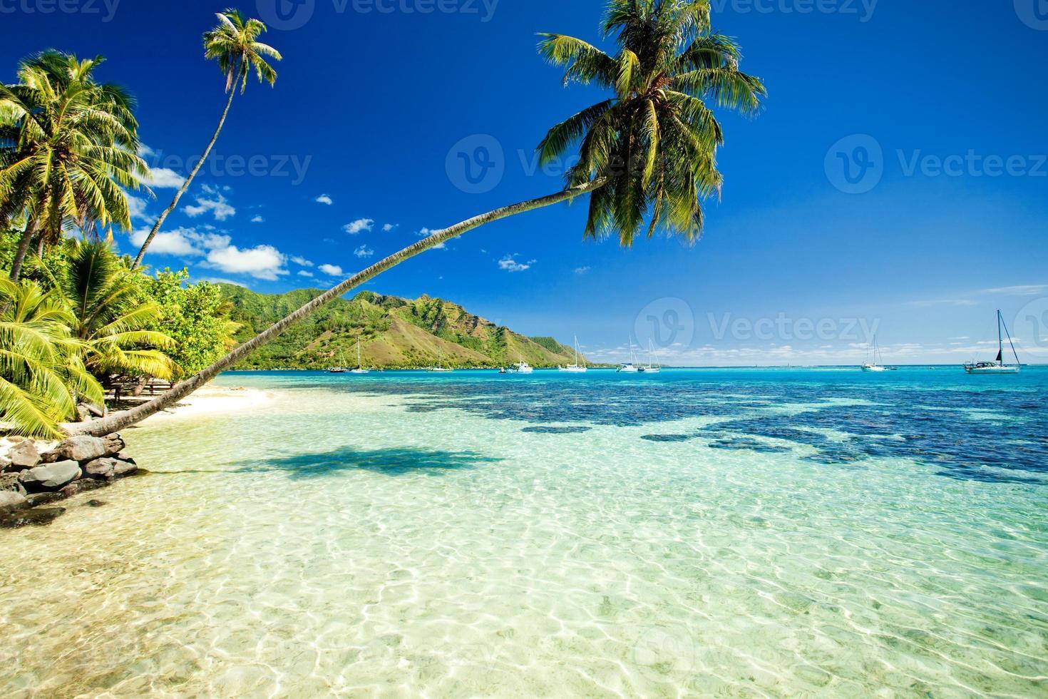 Palm tree hanging over stunning lagoon photo