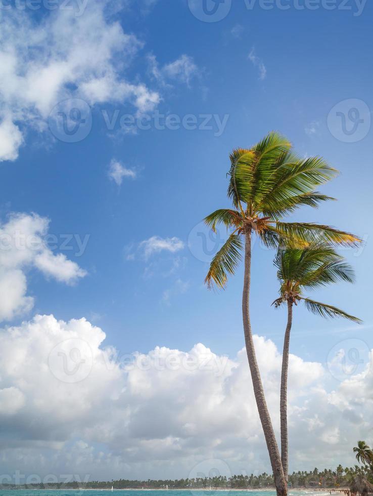 Two palm trees on sandy beach. Coast of Atlantic ocean photo