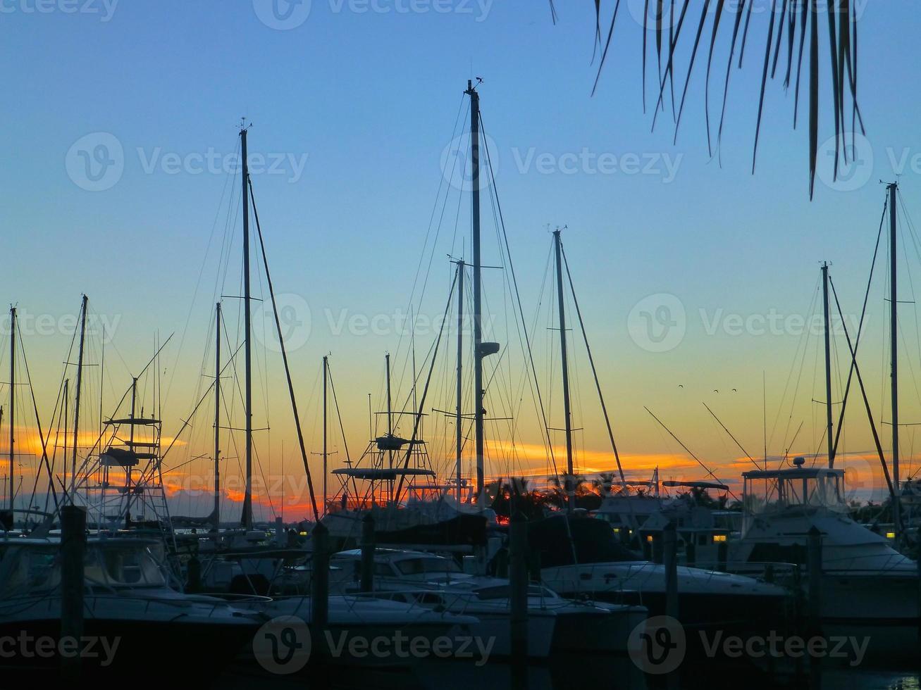 Sailboats docked photo