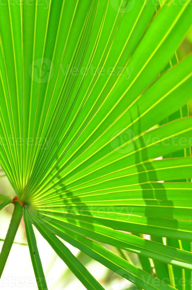 Backlit palm frond with pointy shadows photo