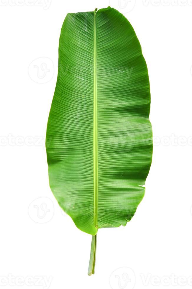 Green banana leaf on white background photo