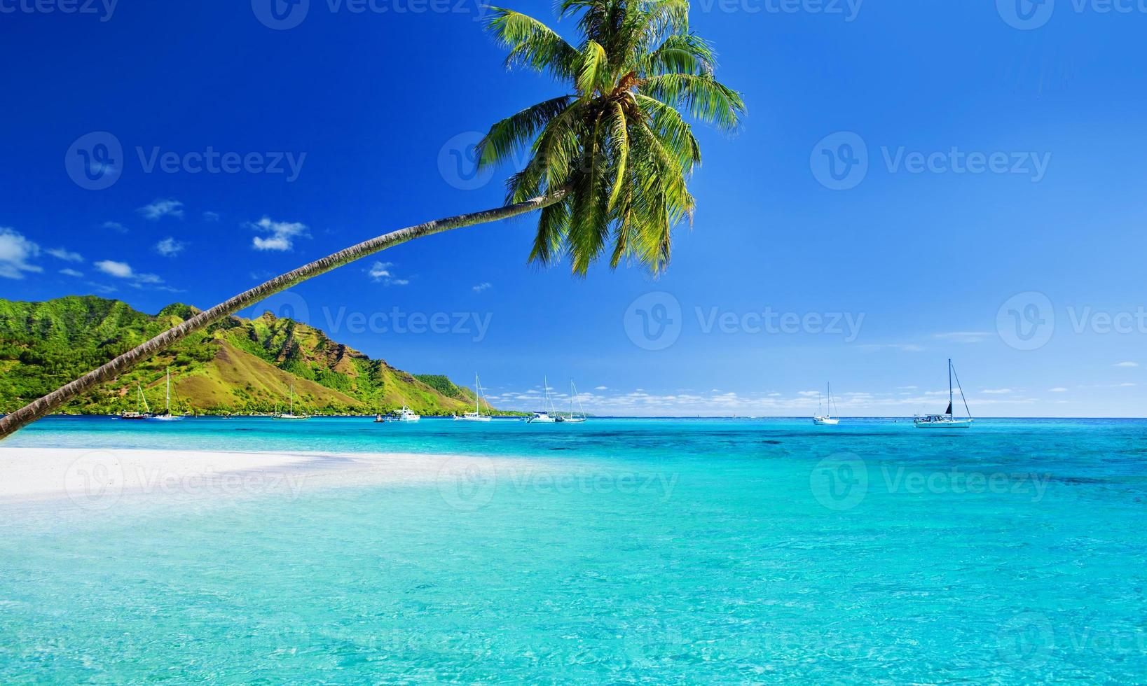 Palm tree hanging over lagoon with jetty photo