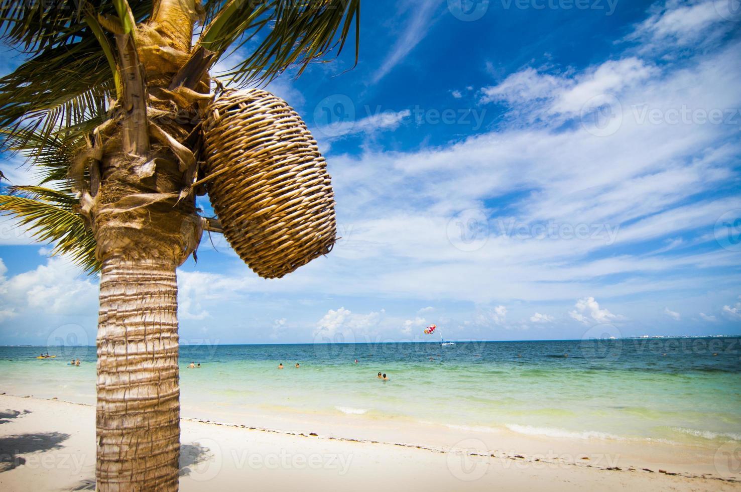 Woven Basket on Palm Tree on Carribean Beach photo