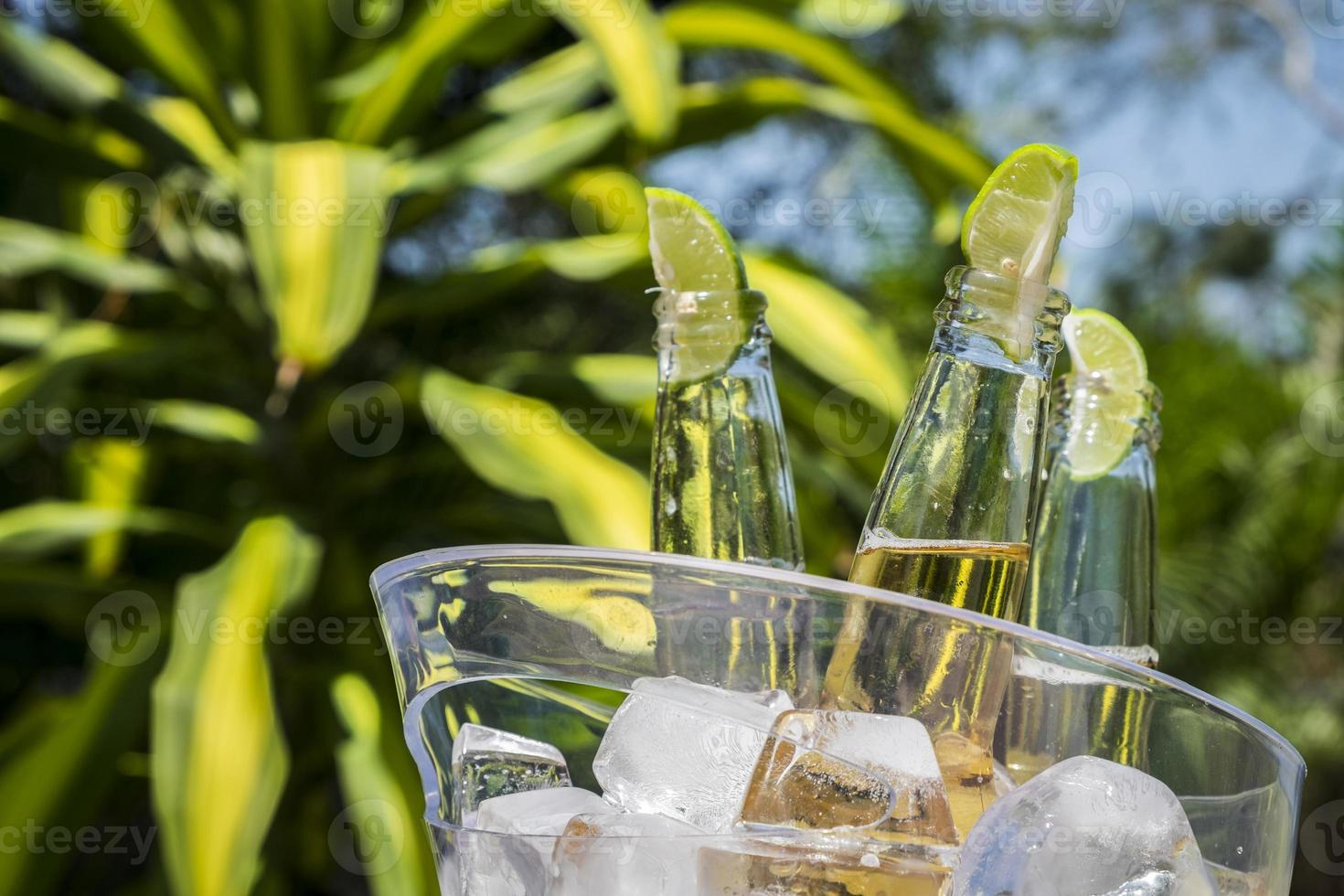 Beer bottles with lime slices in ice bucket photo