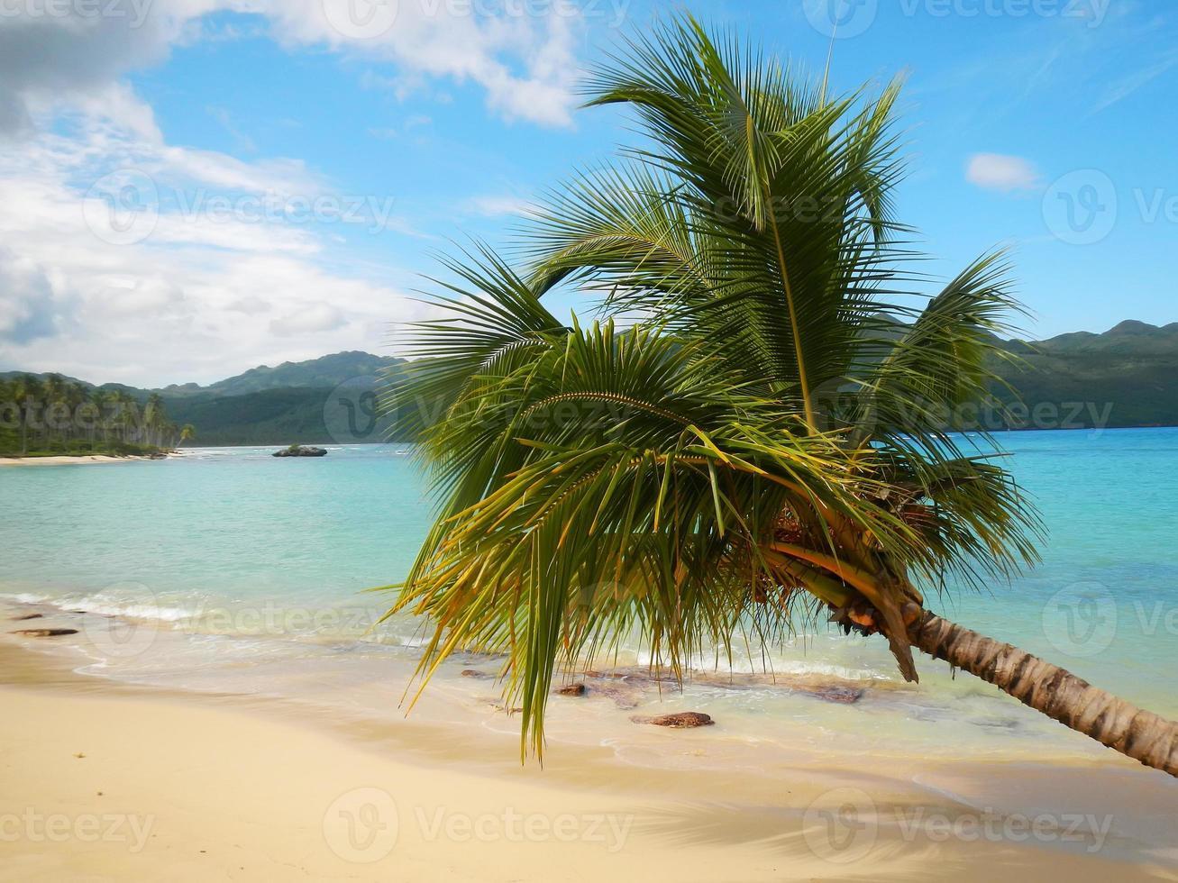 Leaning palm tree at Rincon beach, Samana peninsula photo