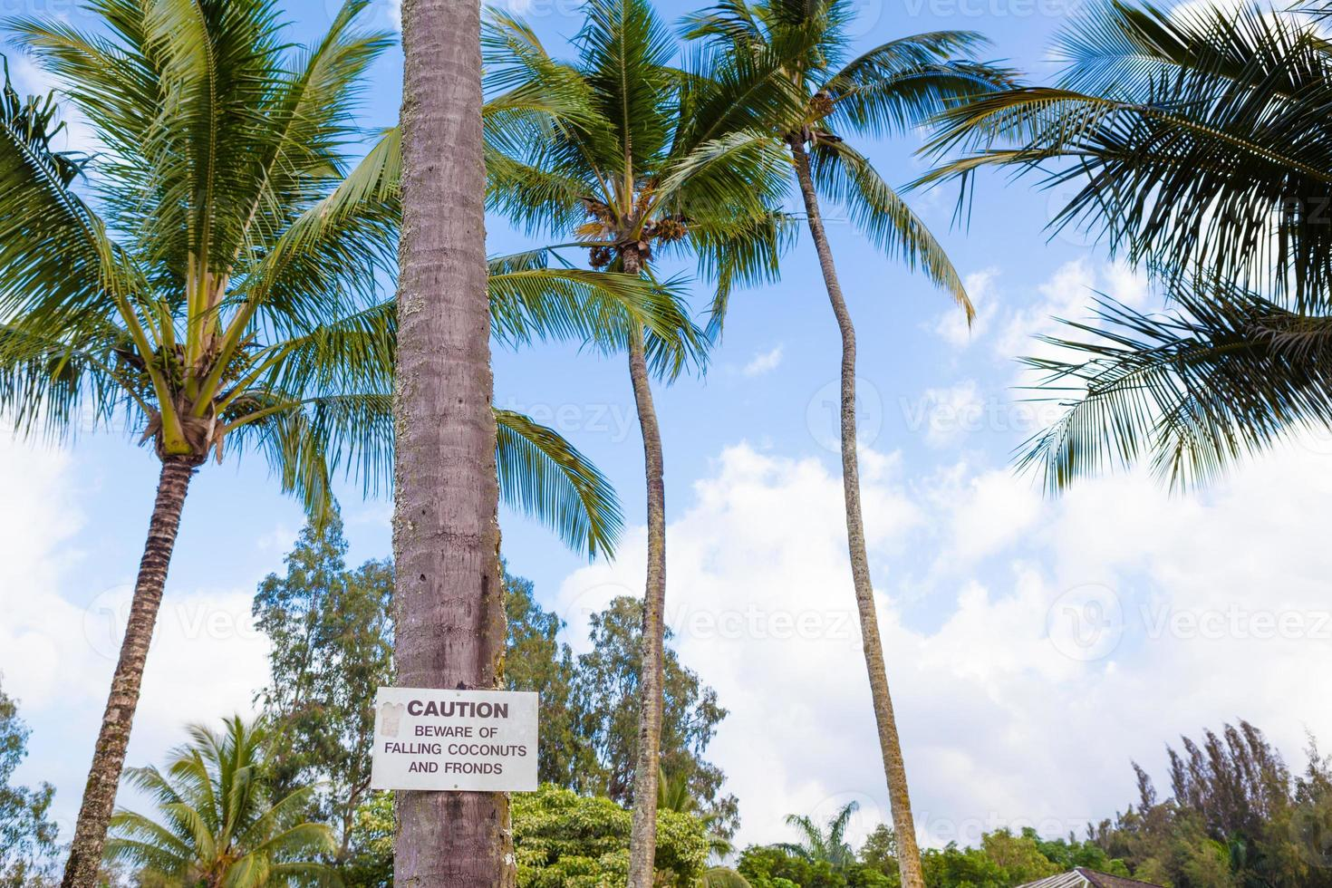 Beware of falling coconuts sign photo