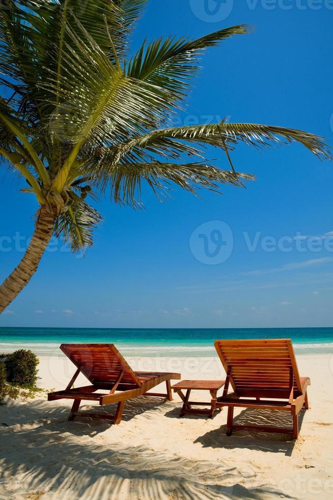 Palm beach chairs tropical sea photo