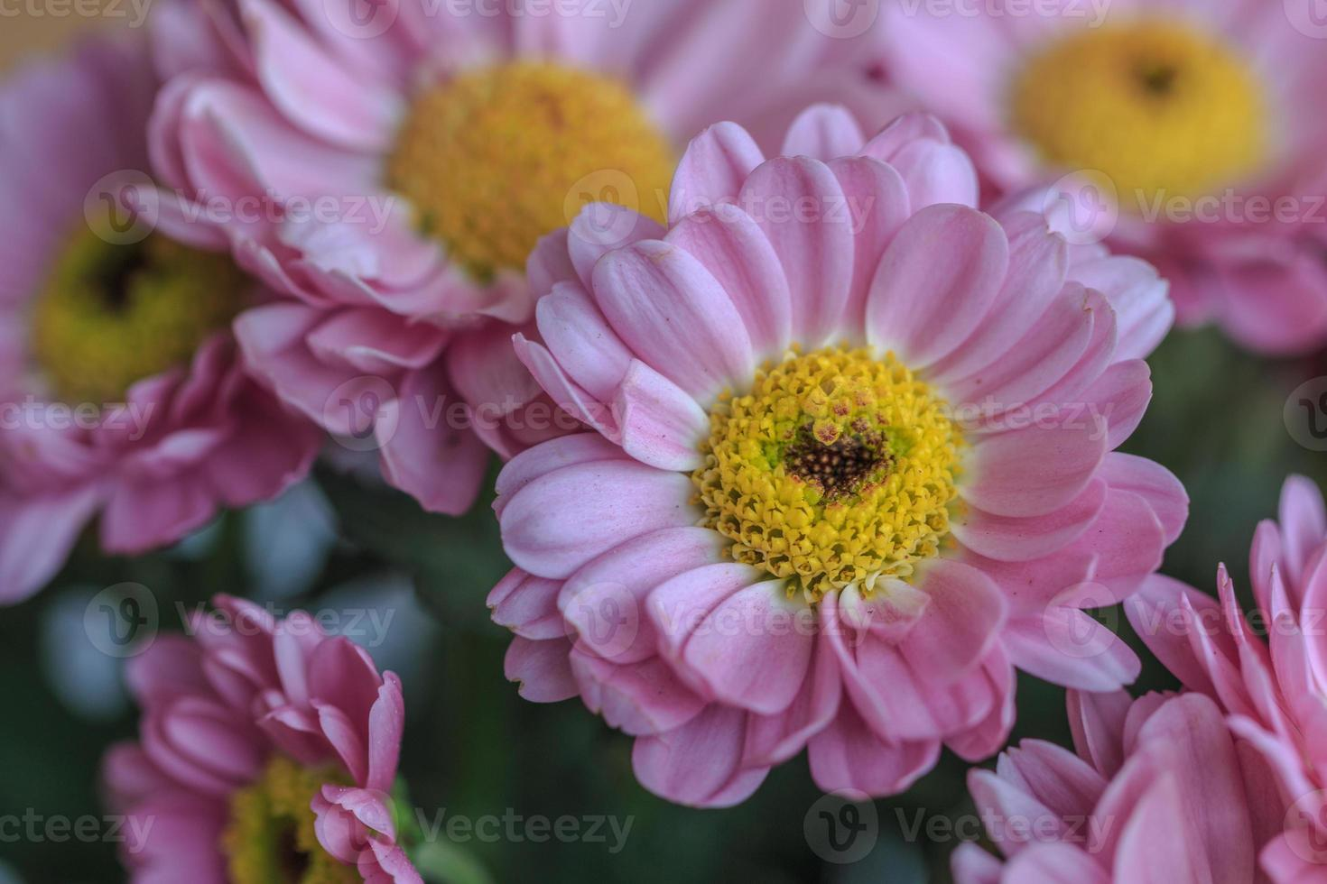 Flower with Heart photo