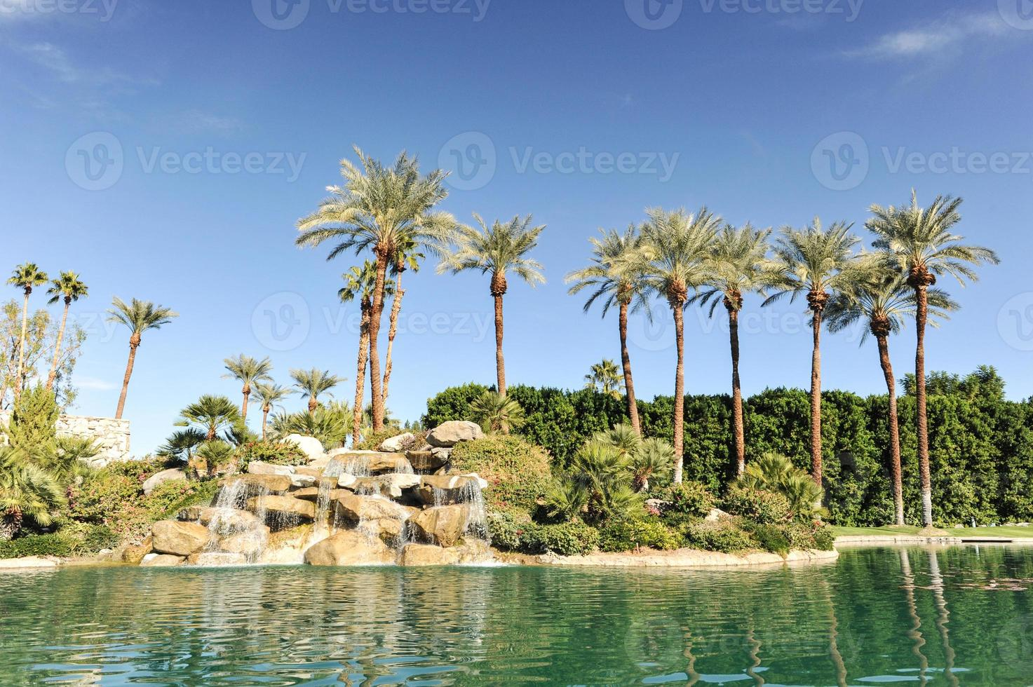 Pool of water with palm trees in a row photo