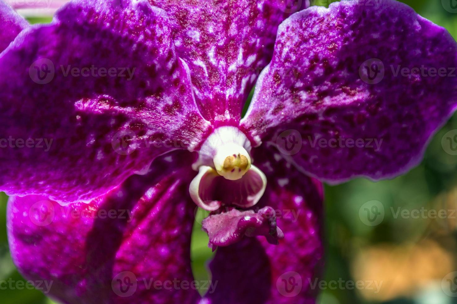 Heart of Orchid. photo