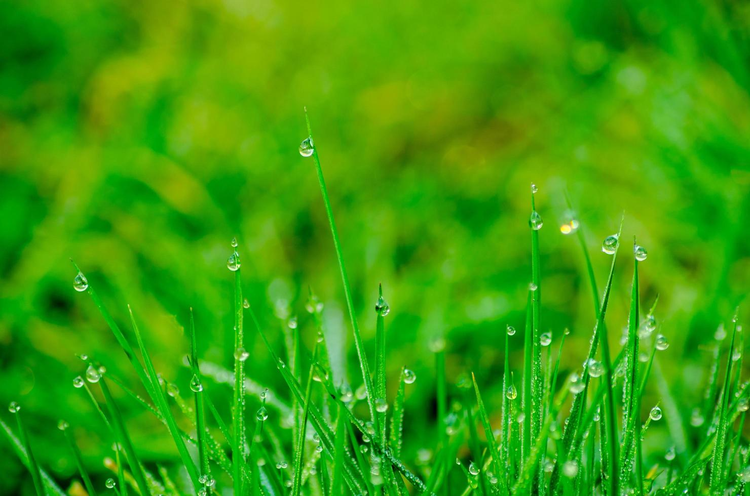 Little dew drops on the grass photo