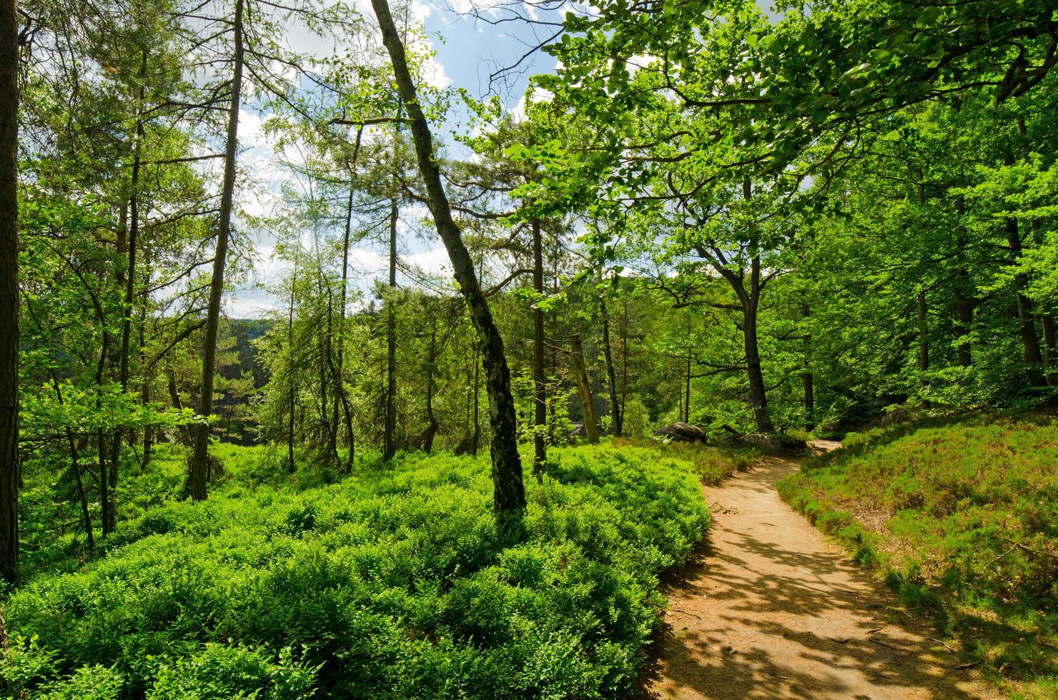 Beautiful path through nature photo