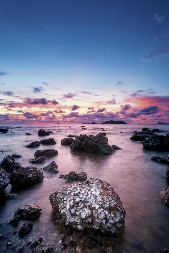 mooie oesterschelpen op strand foto