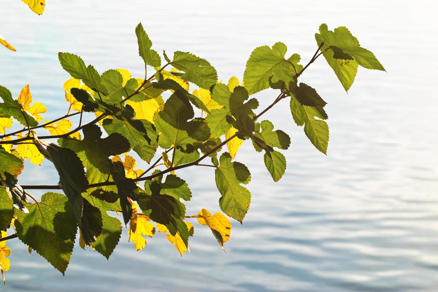 boomtakjes boven water foto