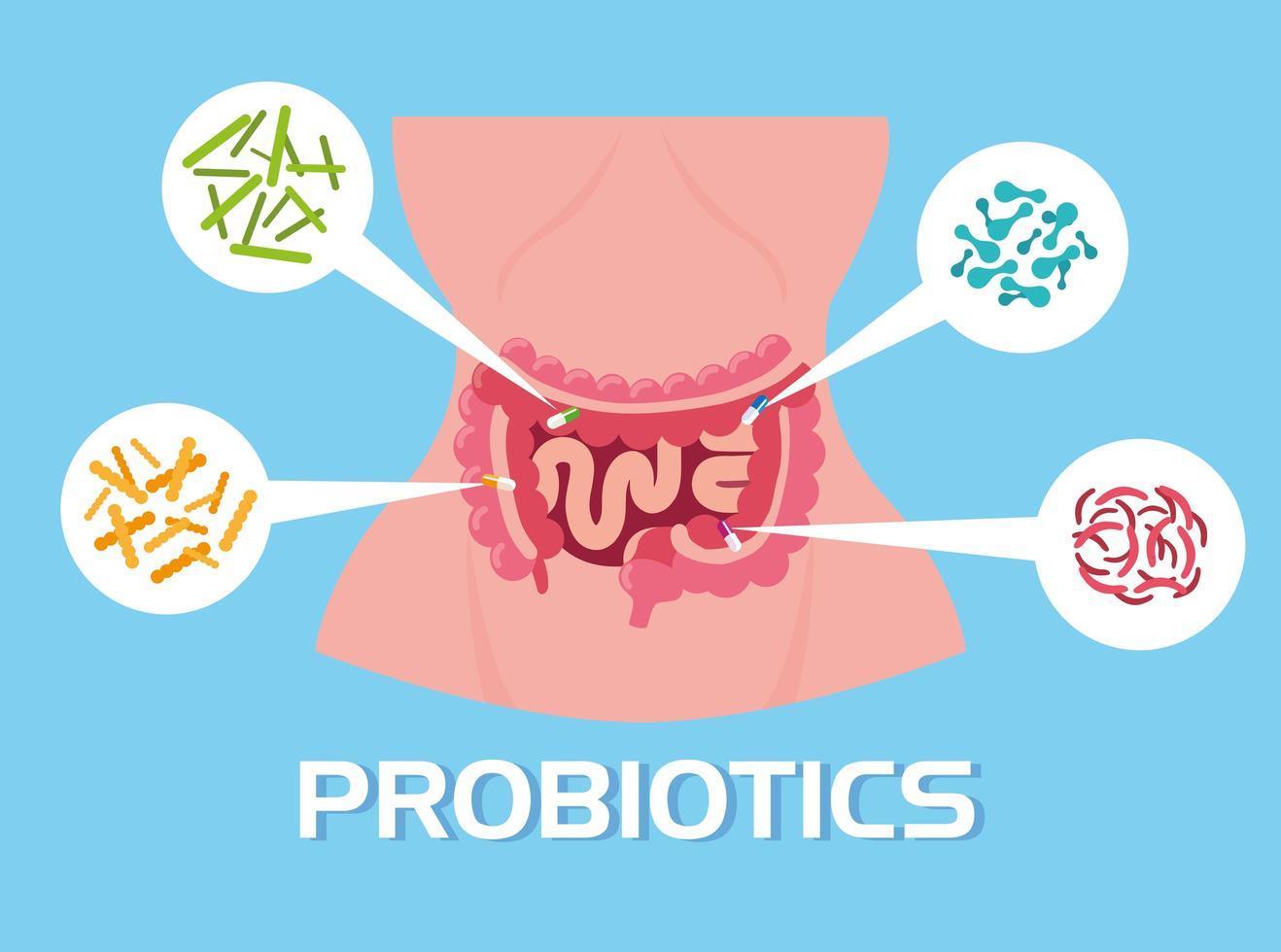 cuerpo de mujer con organismos probióticos vector