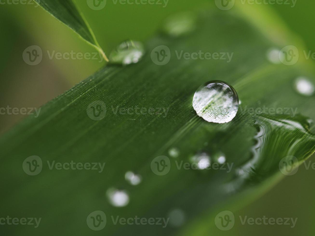 gotas de agua foto