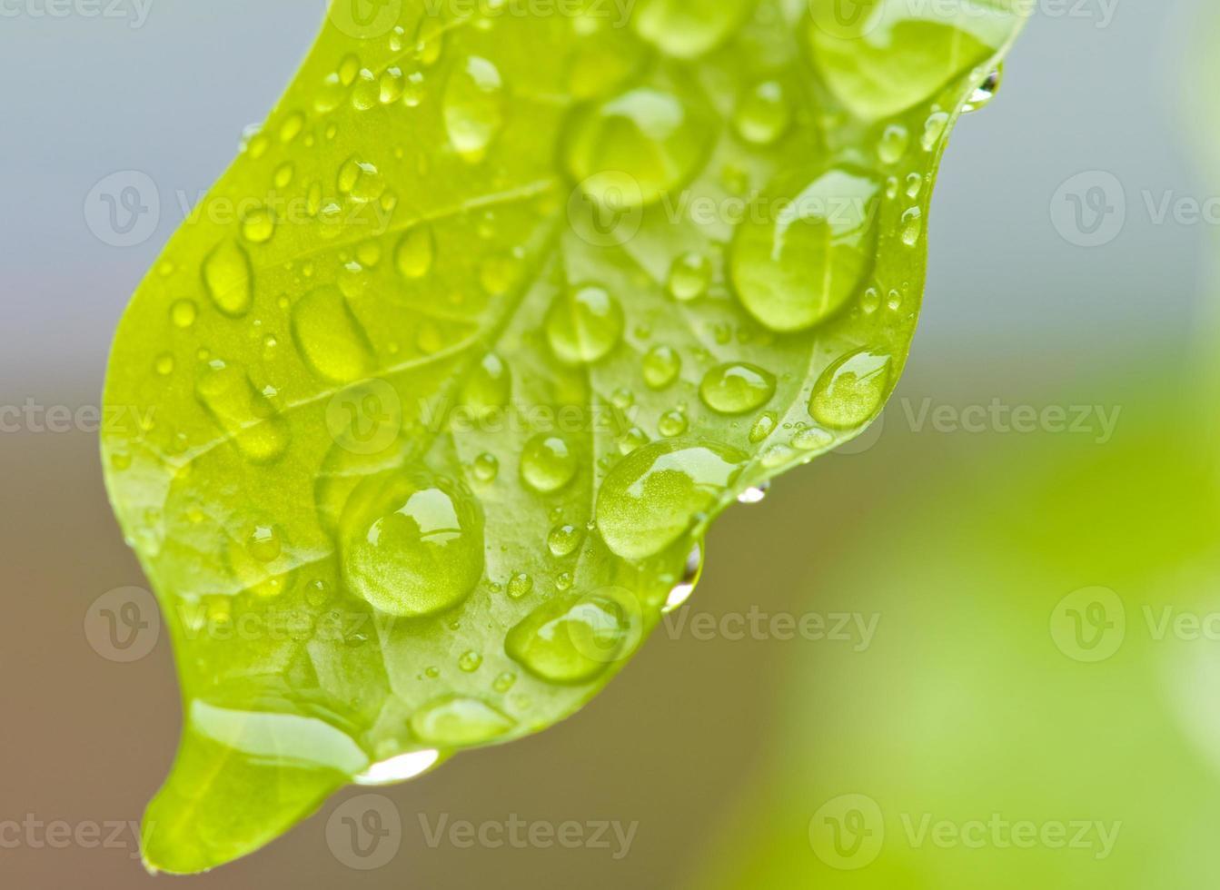 gota de agua foto