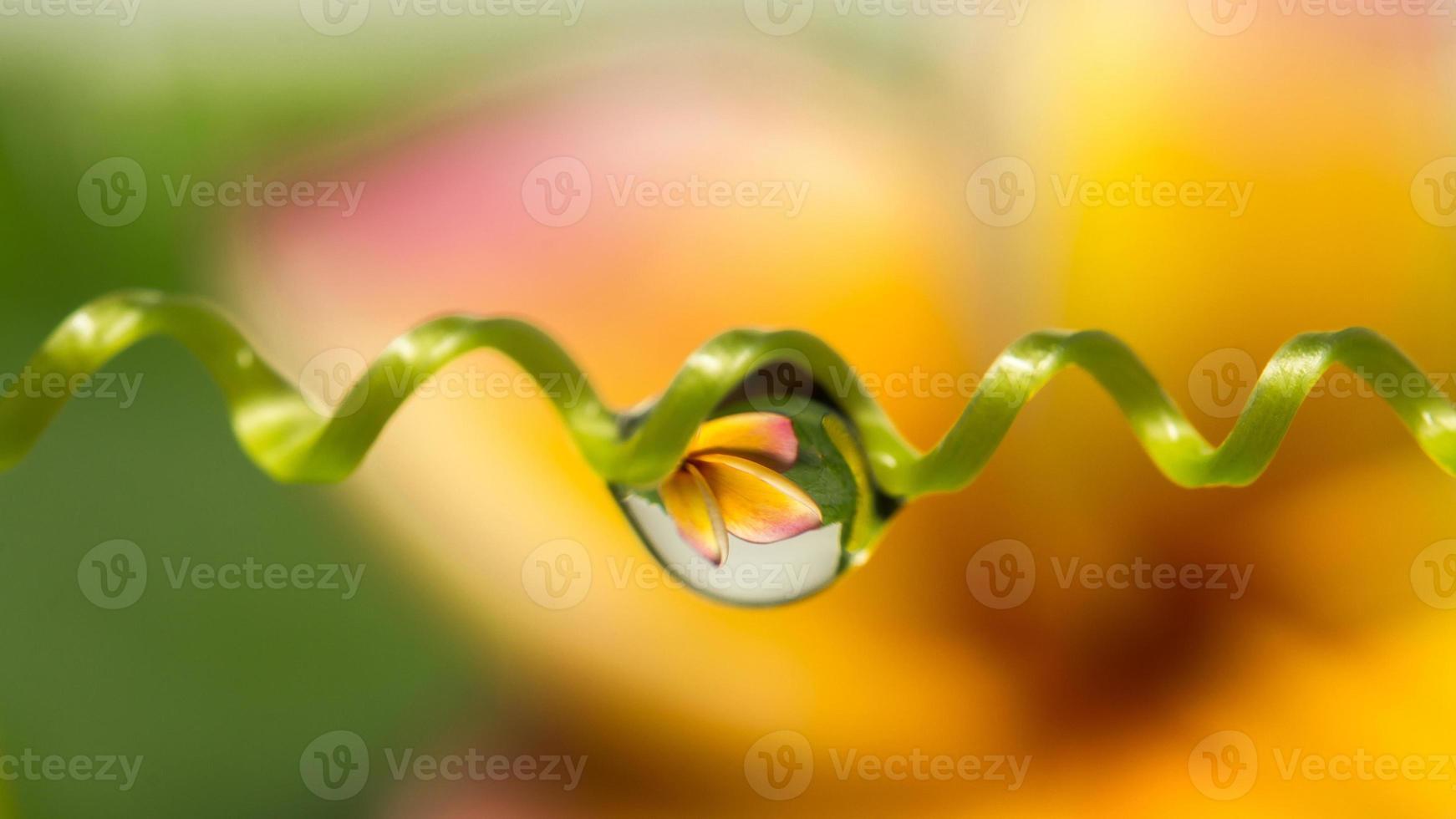 fleurs en gouttes d'eau photo
