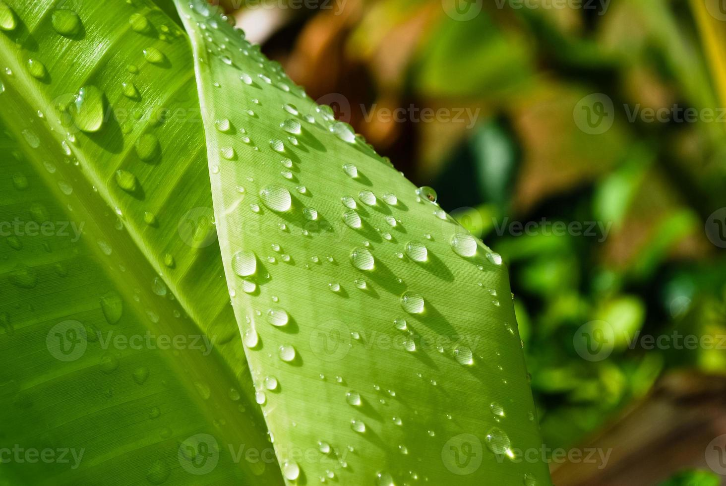 gotas de agua en la hoja foto