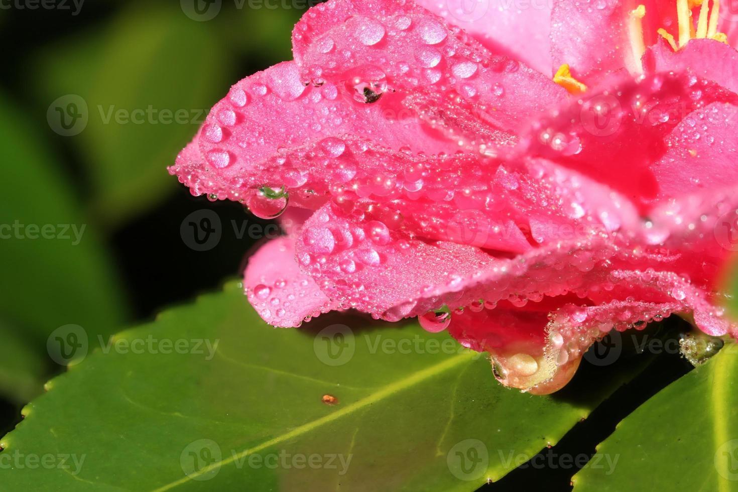 Wassertropfen auf Blume foto
