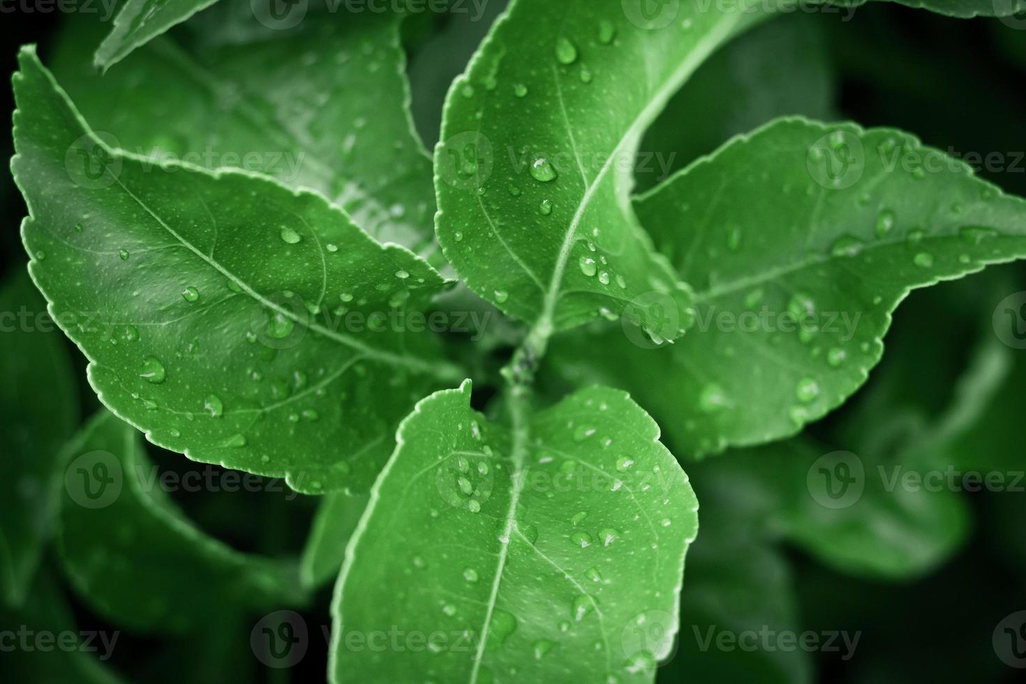 bladeren met waterdruppels foto