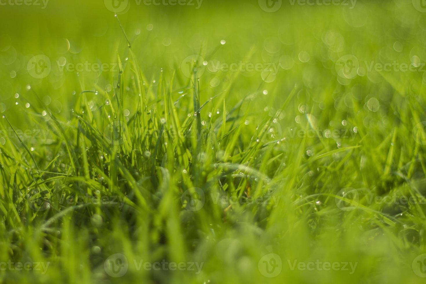 gota de agua sobre la hierba verde foto