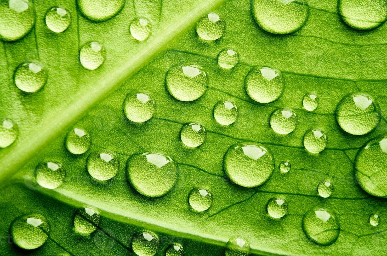 groen blad met druppels water foto