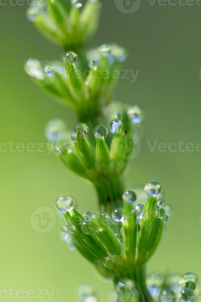 estructura de perlas de agua foto