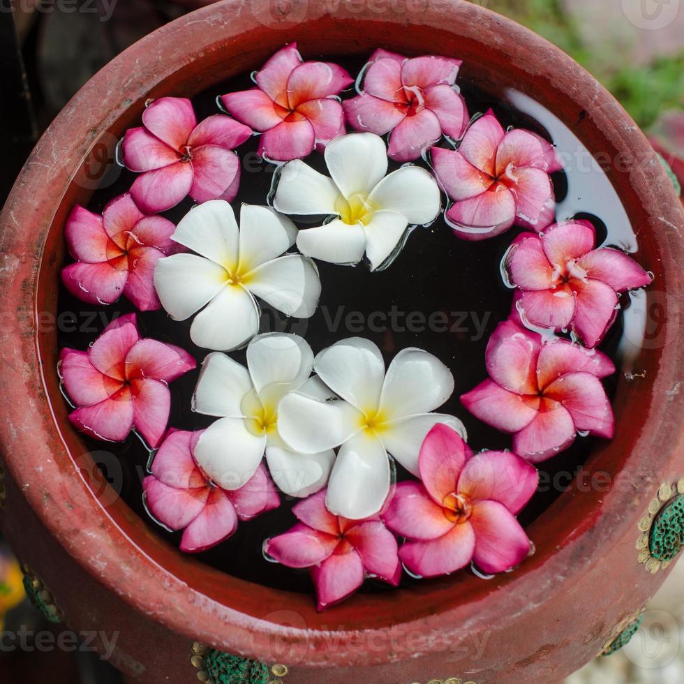 Frangipani flowers on water. photo