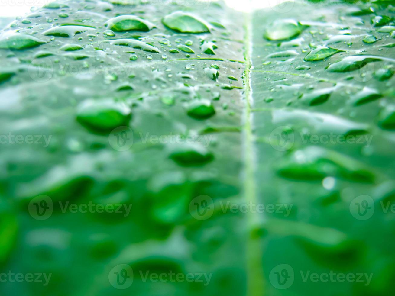 gota de agua en la hoja verde foto