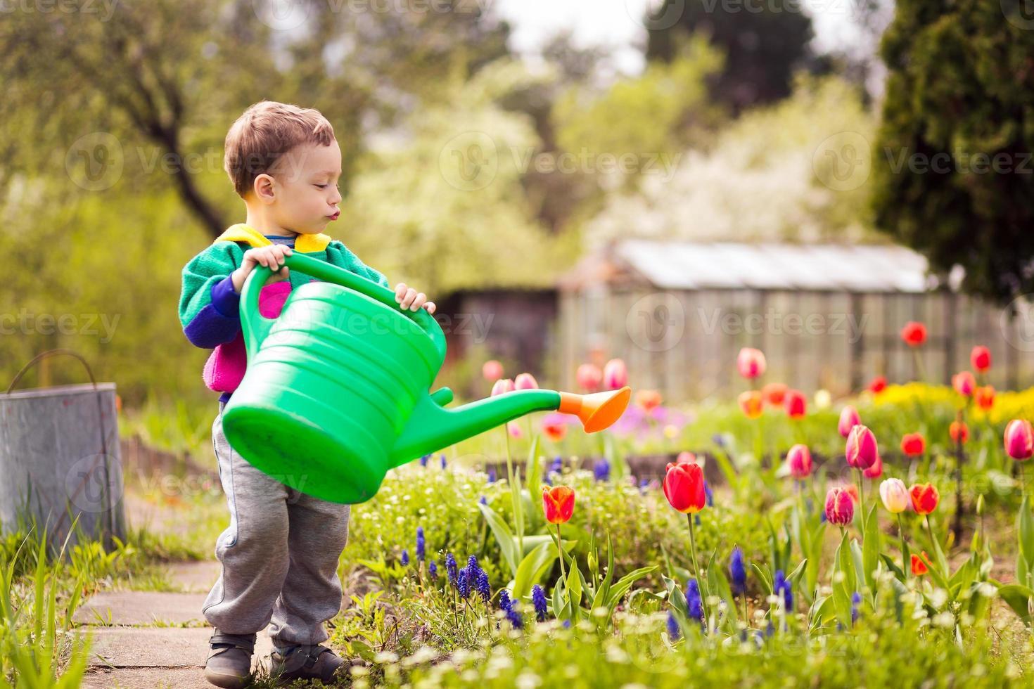 lindo niño regando flores foto