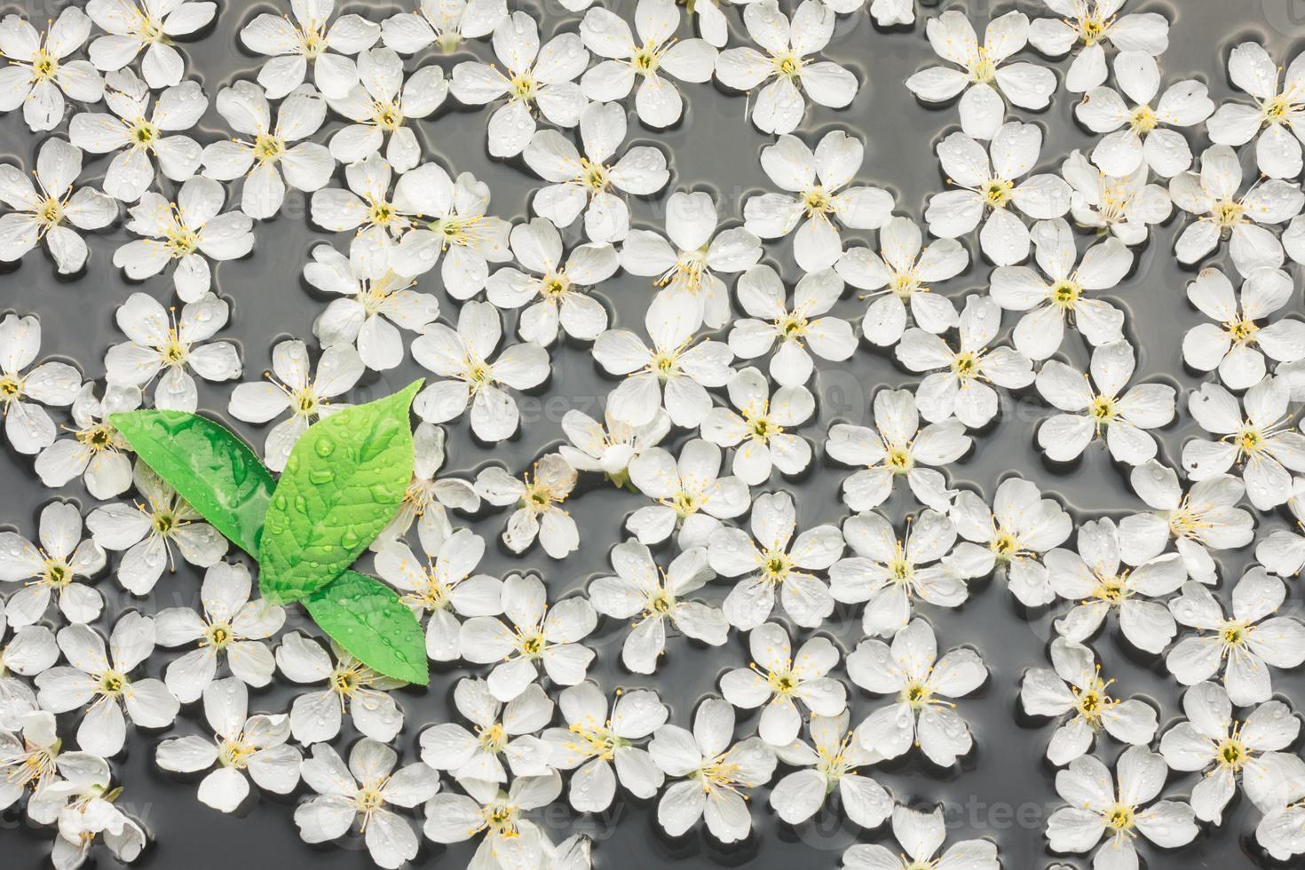 flores de cerezo y hojas en el agua. foto