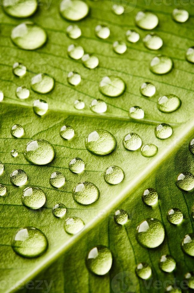 hoja verde con gotas de agua foto