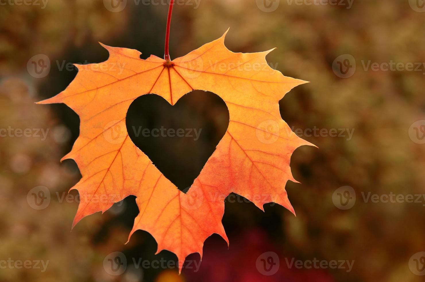 corazón en hoja de otoño sobre un fondo de naturaleza. foto