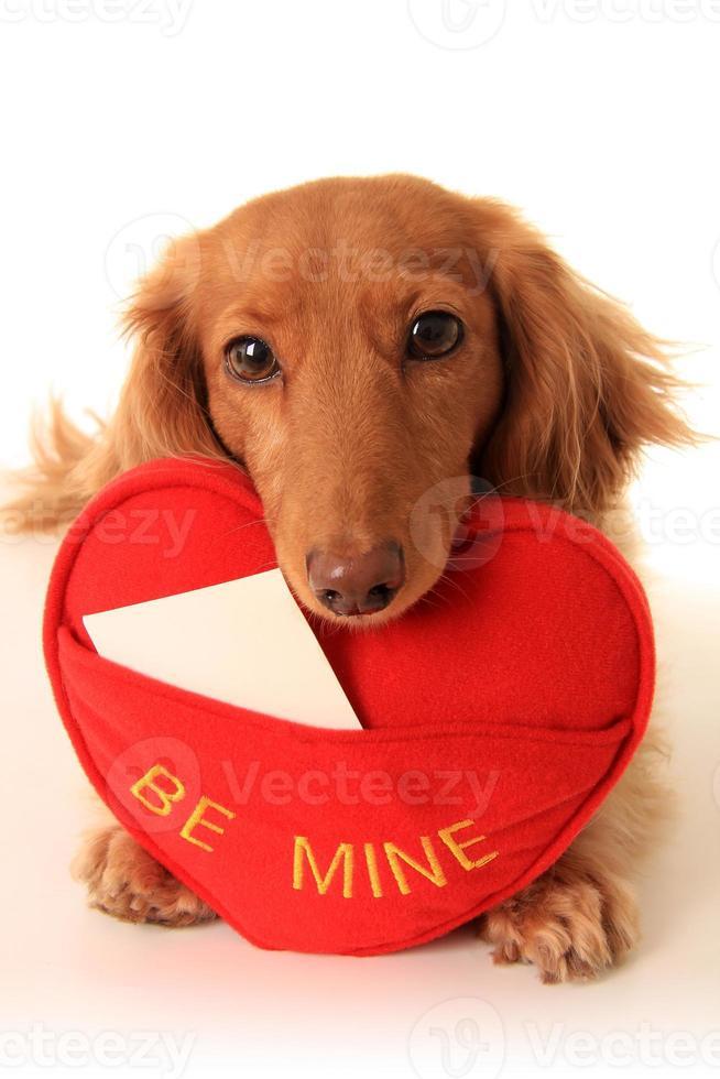cachorro de San Valentín foto