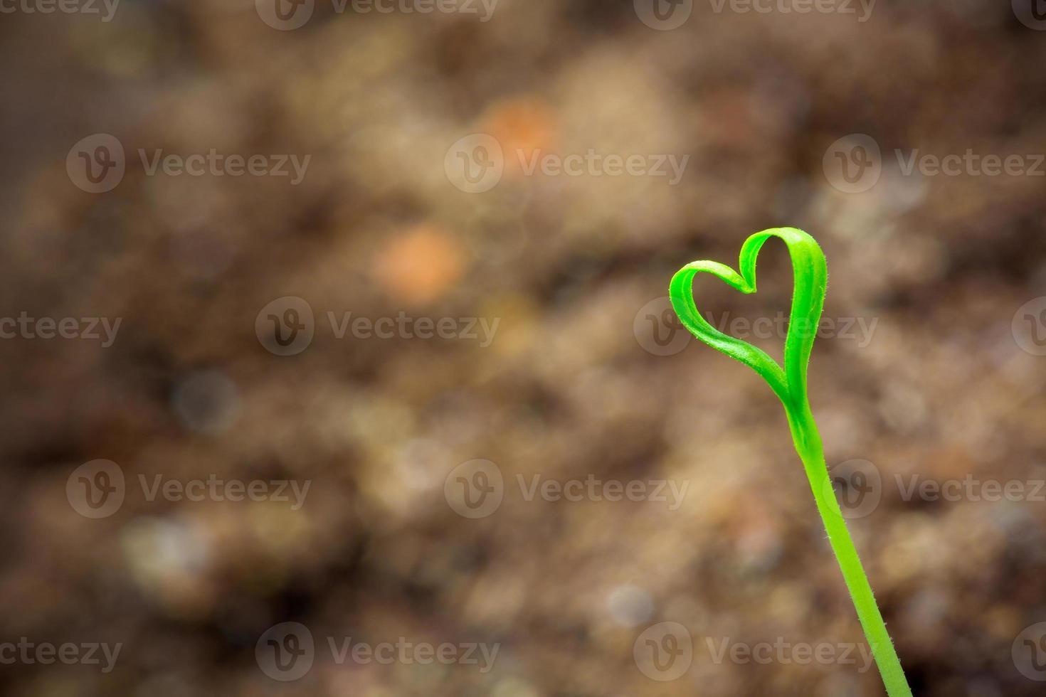 brotar en forma de corazón foto
